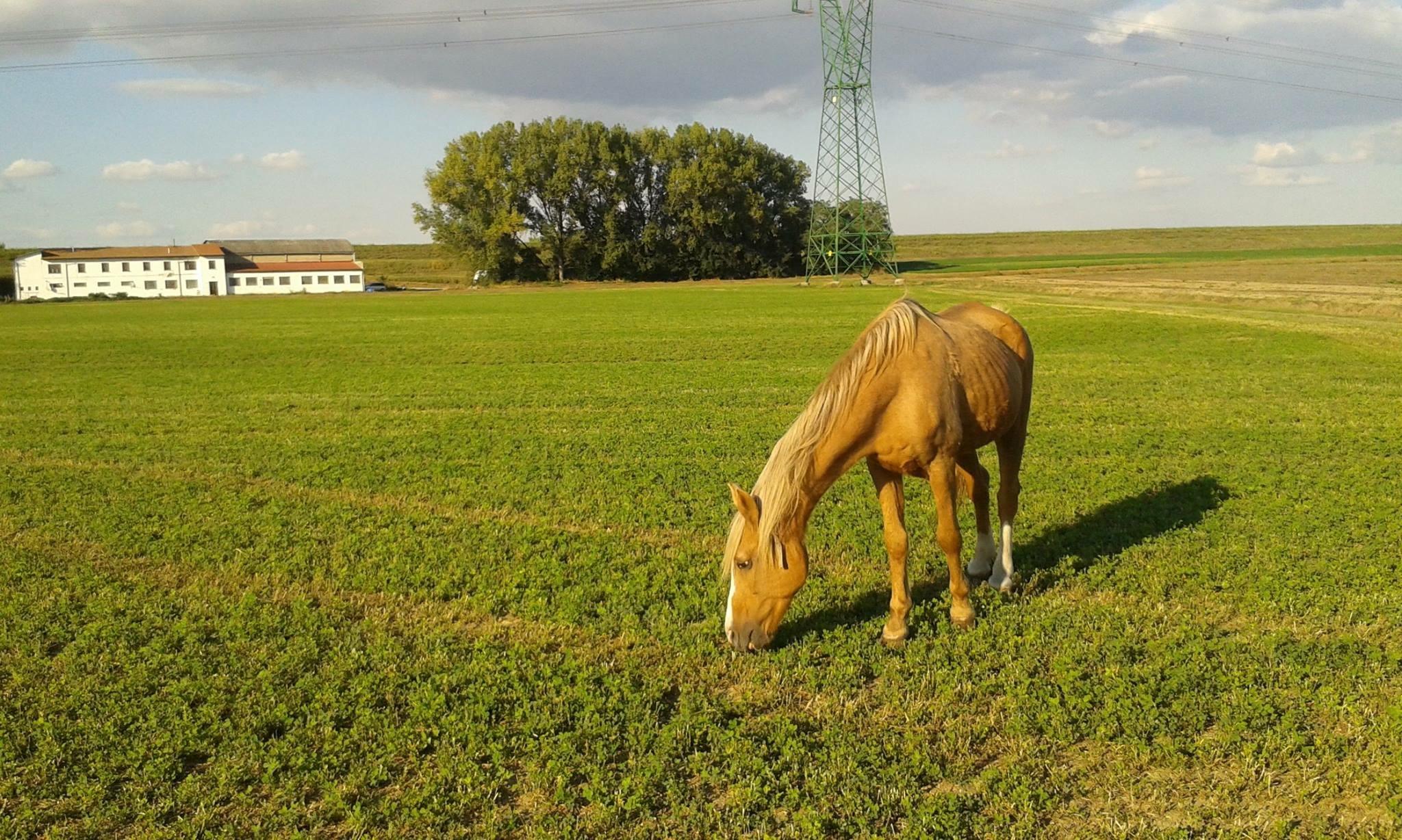 Pensione & affidamento cavalli
